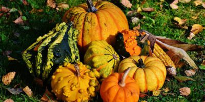 Social Media Thanksgiving